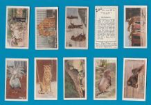 TRADE/ cigarette cards Zoo 1932 by Typhoo Tea